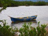 tropical bird, lake view, tropical birds, wooden canoe
