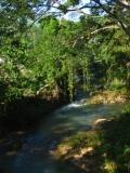 tropical rain forest plants, tropical clip art, tropical landscapes