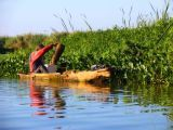 river boats, black river safari,
