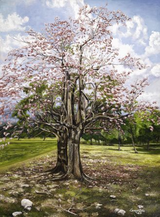 Blooming Jamaican Poui Tree