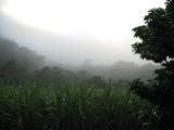 pictures of mist, tropical images, tropical imagery, fog pictures