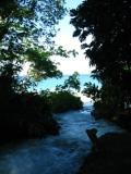 tropical trees, tropical clip art
