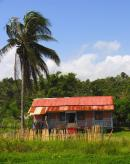 tropical palms, tropical scenery, tropical landscaping, tropical cottage